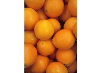 Orange Naveline à jus, cagette de 19 kg