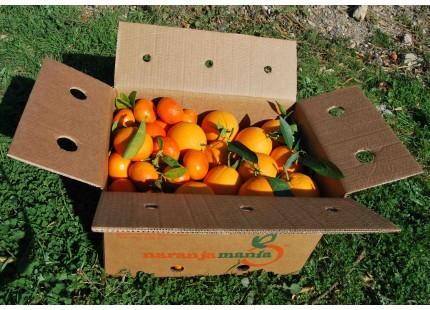 Mixtes boîtes 20 kg:(13kg)  Orange Navelina á jus + (7kg) Mandarine Lorentina