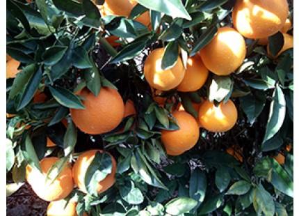Boîte avec 1 melon + 1 pastèque et 20kg jus d'orange