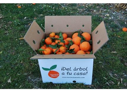 Mixtes boîtes 19 kg: (12kg) Orange Navel Lane-Late de table + (7kg) Mandarine Tardia