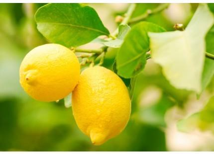 Citrons Eureka 1kg ✔