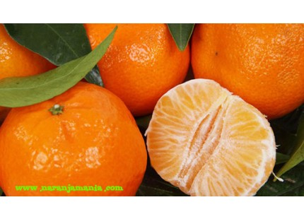 Premières mandarines 14kg