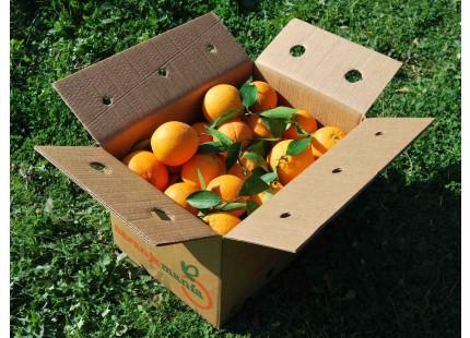 Mixte boîte 15kg orange de table (de 10 kg) + Valencien tomate (5kg)