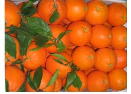 Cagette 9kg Orange Table + Mandarine