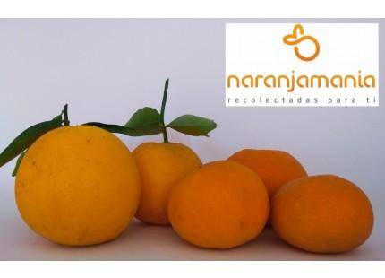 Valencia Late de mesa + Mandarina Tardia 14kg
