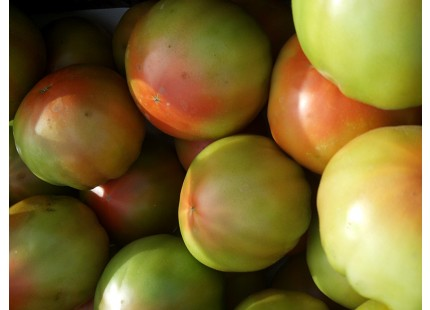 Tomate Tradicional Valenciano 10kg
