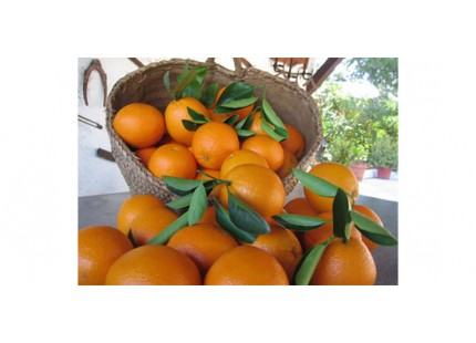 Orange Valencia-Late table + Valencia Late jus 15kg