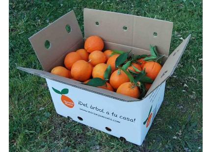 Orange Naveline de table+Orange Naveline à jus, cagette 15 kg.