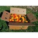 Mixtes boîtes 20 kg: (13kg) Orange Navelina de table + (7kg) Mandarine Clemenules