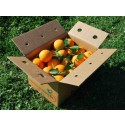Orange Lane-late de table, cagette de 15 kg