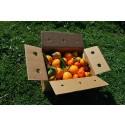 Mixtes boîtes 14 kg: (9kg) Orange Navel Lane-Late de table + (5kg) Mandarine Tardia