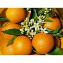 Orange Valencia-Late table 15kg