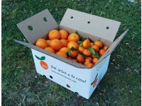 Mixtes boîtes 10 kg: Orange Lane-Late á jus + Mandarine Clemenvilla
