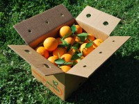 Orange Valencia-Late jus 10kg