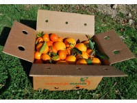 Mixtes boîtes 19 kg: (13kg) Orange Navelina de table + (6kg) Mandarine Clemenules