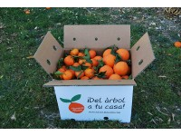 Mixtes boîtes 20 kg: (13kg) Orange Navel Lane-Late de table + (7kg) Mandarine Tardia