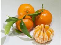 Mandarine tardive, cagette de 20 kg.