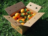 Caja Mixta 19kg de Naranja Zumo (14kg) +  Calabacín (5kg)