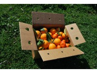 Mixtes boîtes 15 kg: (10kg) Orange Navel Lane-Late de table + (5kg) Mandarine Tardia