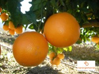Tableau Orange 1kg ✔