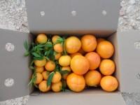 Mixte 9kg Kaki et Clementine Clemenules