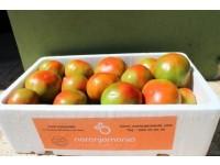 Caja Mixta 20kg de Naranja Zumo (15kg) + Tomate Valenciano (5kg)