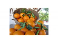Orange Valencia-Late table 10kg