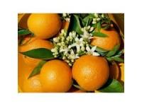 Orange Valencia-Late jus 15kg
