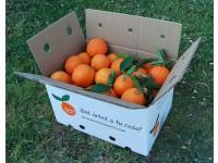 Orange Lane-late de table+Orange Lane-late à jus cagette de 9 kg.